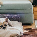 Abandonan mascotas en casa por Coronavirus. ¿Qué hacer con tu mascota si tienes que ser hospitalizado?