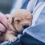 ¿Puedo llevar a mi mascota al veterinario durante COVID-19?