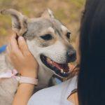 Eutanasia para mascotas, como despedir a tu mascota durante COVID-19