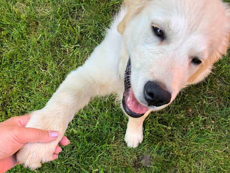 Enséñale un truco nuevo a tu mascota, mascotas, Pets in the Sky