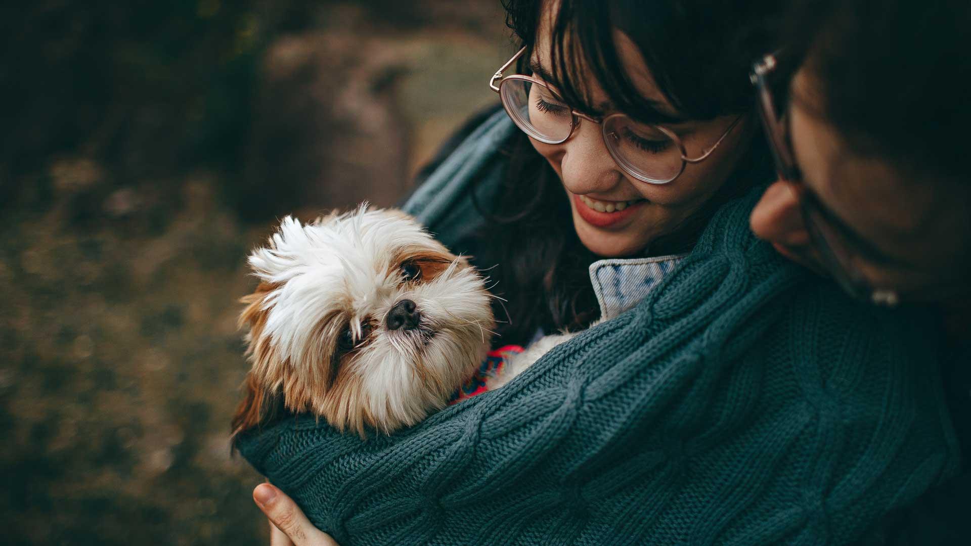 cancer en mascotas signos de atencion