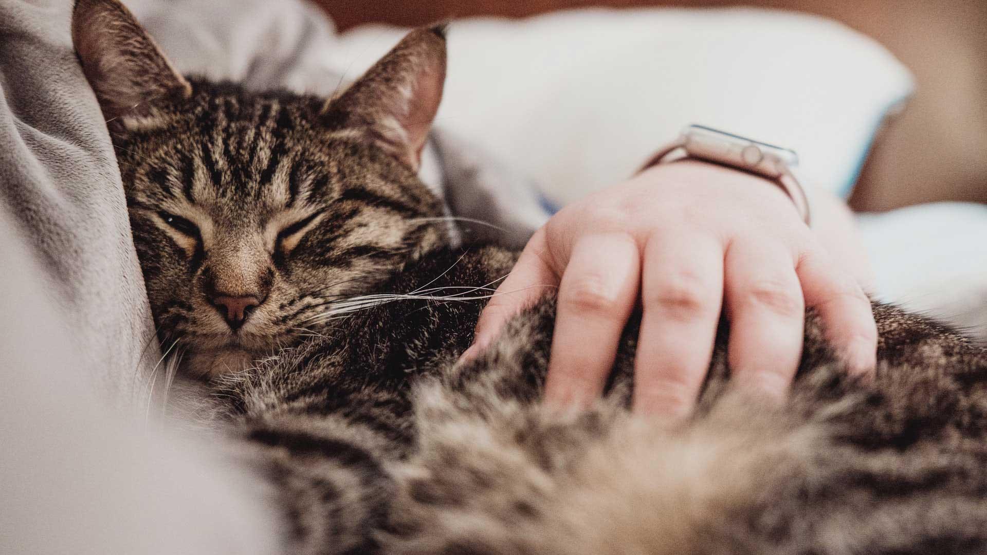 planeacion de mascotas para duenos responsables plan de previson para mascotas