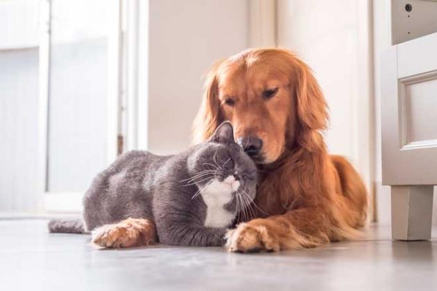 cremacion de mascotas comunitaria colectiva