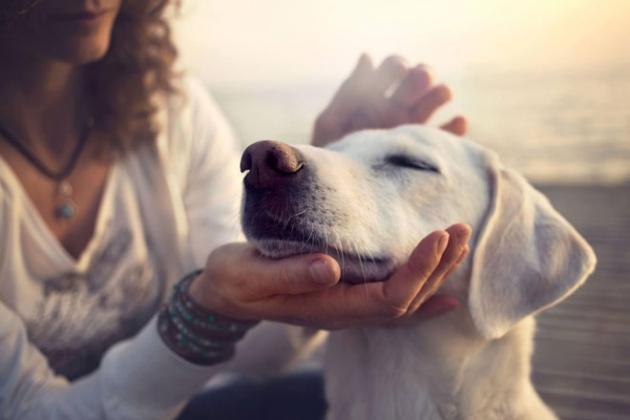 cremacion de mascotas individual