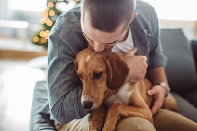 eutanasia para mascotas