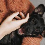 5 formas en que las mascotas ayudan a la salud mental
