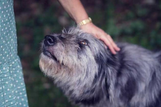 Como lidiar con la perdida de una mascota